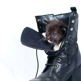 Puss in Boot by Sondra Sarra - Artistic Objects Clothing & Accessories ( laces, boot, cat, kitten, white, black,  )