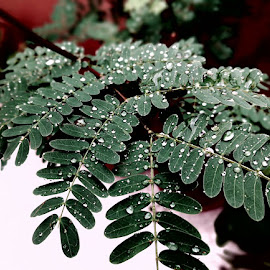 Water droplets brightens the colour by Bushra Feroz - Nature Up Close Leaves & Grasses