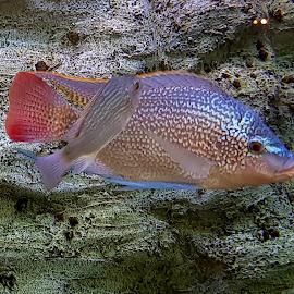 fish in aquarium by Patrizia Emiliani - Instagram & Mobile Android ( fish, aquarium,  )