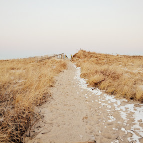 Winter Path by Lizz Condon - Landscapes Beaches ( dunes, snow, dune, path, beach, cape cod )