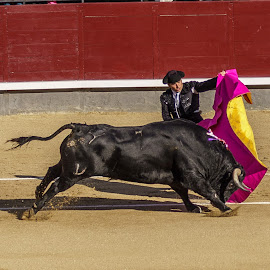 Matador and the Bull by Lee Davenport - Sports & Fitness Other Sports