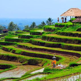 Padi's field by Anif Putramijaya - City,  Street & Park  Vistas