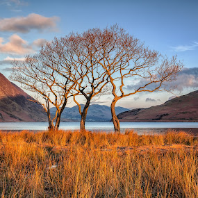First light on the lake by Andy Young - Landscapes Mountains & Hills ( uk, tree, early morning light, crummock water, cumbria, reflections, sunrise, lake district )