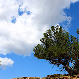 Lone Desert Tree by LaDawn Park - Nature Up Close Trees & Bushes
