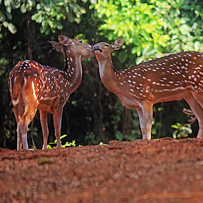 Love by Saeed Shoummo - Animals Other Mammals
