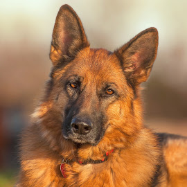 My Zoey:-)  by Shari Schultz McCollough - Animals - Dogs Portraits