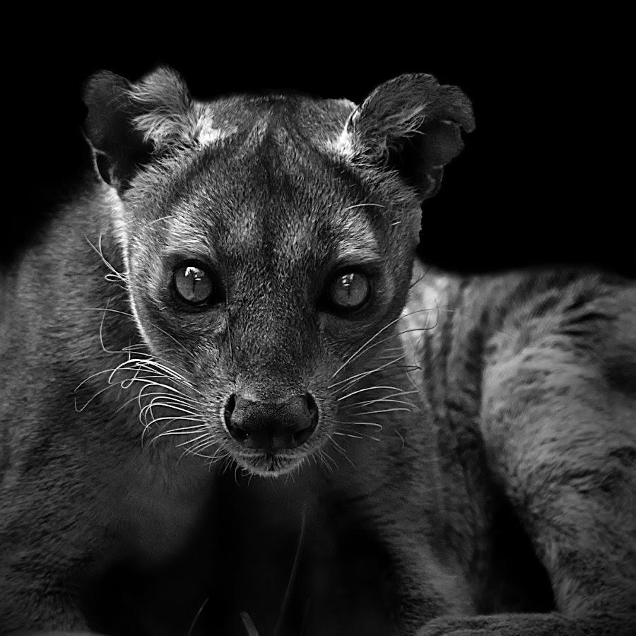 by Shawn Thomas - Black & White Animals