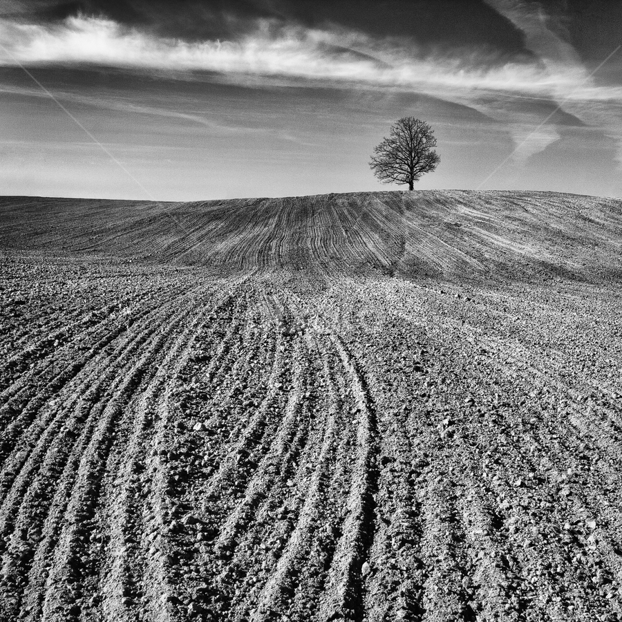 fields of hope by Eriks Zilbalodis - Landscapes Prairies, Meadows & Fields ( lonelines, nature, tree, white, latvia, landscapes, black, fields )