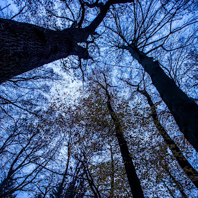 TREES IN THE SKY  by Frank Photography - Nature Up Close Trees & Bushes ( november, forrest, sky, cold, trees )