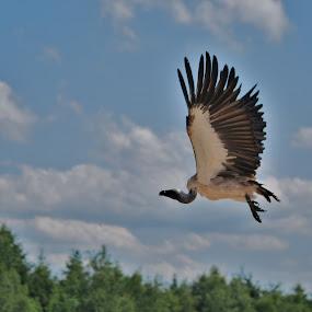 by Jade Bracke - Animals Birds ( bird, nature, photography, animal,  )