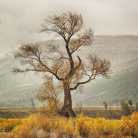 A Tree Grows In Yellowstone by Bud Schrader - Landscapes Prairies, Meadows & Fields