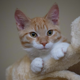by Amy Ann - Animals - Cats Kittens (  )