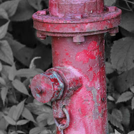 Red Fire Hydrant In The Park by Maureen McDonald - City,  Street & Park  City Parks ( july 2016, hueston woods ohio, summer 2016, fire hydrant, camping trip, color splash )