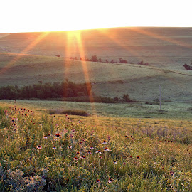Flint Hills in the Morning by Jackie Eatinger - Landscapes Prairies, Meadows & Fields (  )