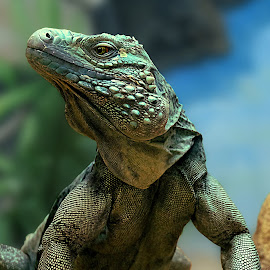 Take a Stance by Shawn Thomas - Animals Reptiles (  )