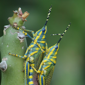 makinig by Harshad Dhapa - Animals Insects & Spiders ( dhapa harshad )