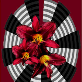 Day lillies by Marissa Enslin - Abstract Patterns