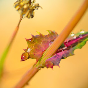 A weed in my garden by Bradley Bath - Abstract Macro