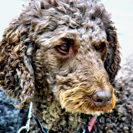by Trudy Mader - Animals - Dogs Portraits (  )