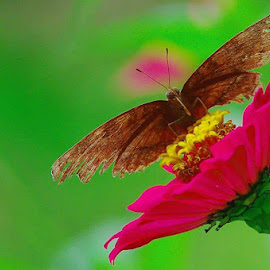 Broken Wings by Happy Cristian Karundeng - Novices Only Flowers & Plants