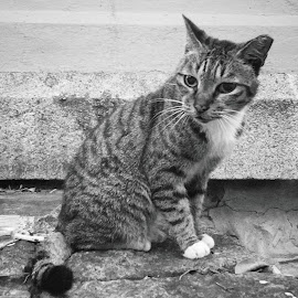 After Storm by Kwong Chung-man - Animals - Cats Portraits