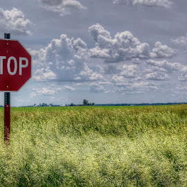 stop! by Fraya Replinger - City,  Street & Park  Street Scenes ( clouds, sign, stop, sky, grass, stop sign, prairie, country )