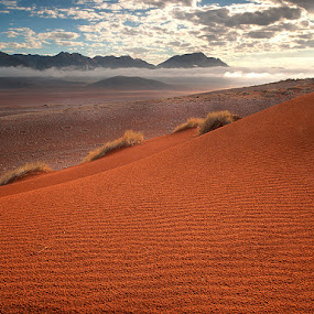 Morning Light by Fran Gallogly - Landscapes Deserts ( clouds, grasses, dunes, mountains, desert, fairy circles, namib, pwcredscapes-dq, sunrise, nnamib )