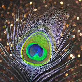 Glowing Feather by Kaushik Bera - Artistic Objects Other Objects (  )