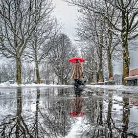 Red Humbrella by Jesus Giraldo - City,  Street & Park  Street Scenes ( water, humbrella, reflection, winter, red, woman, street, trees, walk, paddle,  )