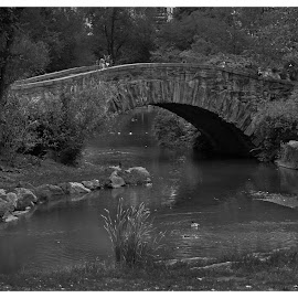 by Mark Hundt - City,  Street & Park  City Parks ( relax, tranquil, relaxing, tranquility )