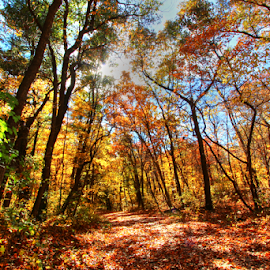 by Dipali S - Landscapes Forests ( orange, community, beauty, leaf, beauty in nature, sunlight, sun, michigan, nature, tree, autumn, foliage, branch, bush, glowing, oak tree )