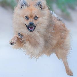 go hugo by Michael  M Sweeney - Animals - Dogs Running ( puppy, michael m sweeney, nikon dog, nikon, run, dog, runing )