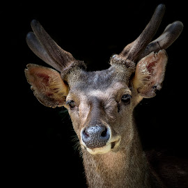 Hello! by Alfonso Rahardja - Animals Other Mammals ( animals, fauna, small animals, mamals, deer )