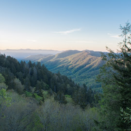 Morning Mountains by Thomas Shaw - Landscapes Mountains & Hills ( clouds, green, tennessee, the great smoky mountains, forest, landscape, woods, photography, sun, national forest, national park, mountains, sky, blue, landscape photography, trees, sunrise, pine trees, pine, smoky mountains )