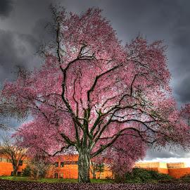 by Todd Klingler - Nature Up Close Trees & Bushes