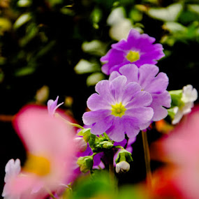 flowee by Akash Kumar - Novices Only Flowers & Plants ( ooty )