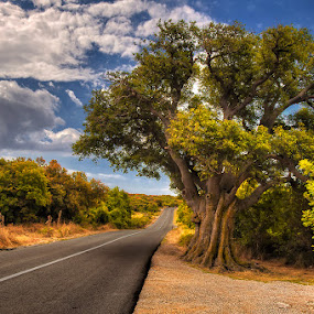 Tree by the road by Miro Cindrić - Landscapes Travel