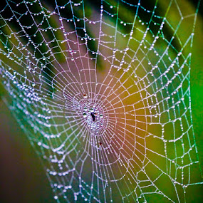 by Johannes Dayrit - Nature Up Close Webs