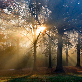 Heaven Sun-rays  by Sandra Rust - Landscapes Forests ( fall leaves, fall colors, sunrays, forest, sunlight through trees )