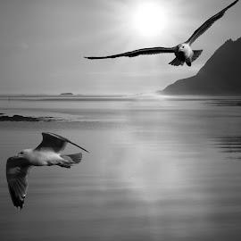 seagulls by Bjørn Bjerkhaug - Digital Art Animals
