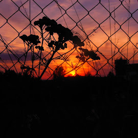 the imprisoned sun by Libuše Kludská - Landscapes Sunsets & Sunrises
