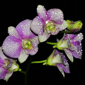 by Pandu Sinatriyo - Nature Up Close Flowers - 2011-2013