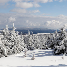 by Pavel Vlček - Nature Up Close Trees & Bushes