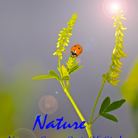 Nature Never Goes Out Of Style by Kathy Suttles - Typography Captioned Photos ( climbing, style, nature, sunflare, ladybug, yellow, portrait )