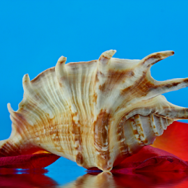 by Dipali S - Artistic Objects Other Objects ( rose, shells, spiked, petals, decoration, artistic, seashells, natural )