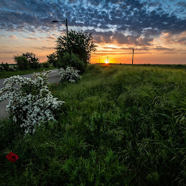 road to home back by Lupu Radu - Landscapes Sunsets & Sunrises ( field, sunset, field  road, poppies )