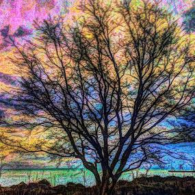 TREE OF LIFE by Louis Perlia - Uncategorized All Uncategorized ( sky, hdr, spectrum, color, artistic, trees, beach )