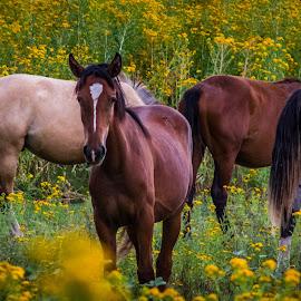 Horses (captive) by Gannon McGhee - Animals Horses ( rio, horses, arizona, rico, flowers )