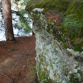 by Kathy Kehl - Nature Up Close Rock & Stone ( forests, stone, rock, forest, stones, rocks )