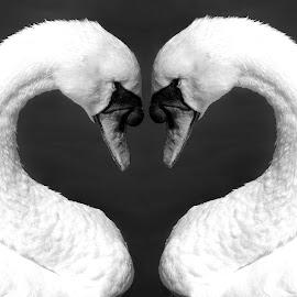 by Photo9981  XXX - Digital Art Animals